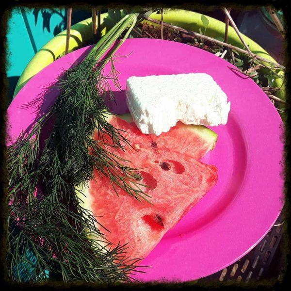 Chille dille kruiden munt koriander basilicum rozemarijn tijm peterselie